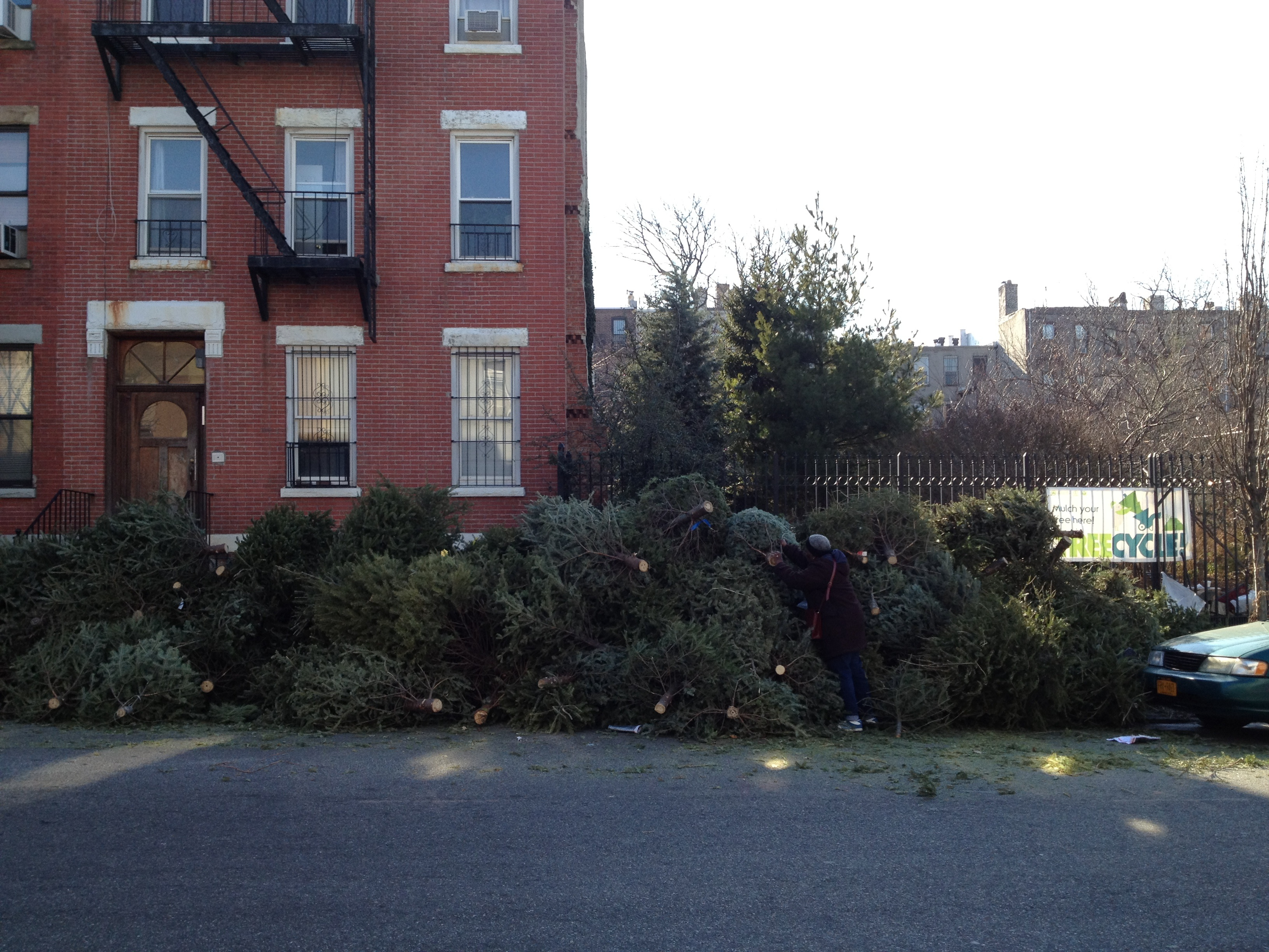 2012 Mulchfest - Diane displays height of Christmas tree pile