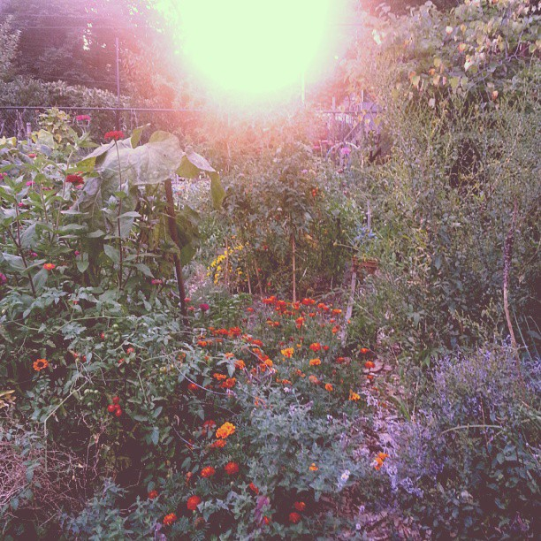 August 2013 - Sunset