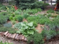 The herb bed