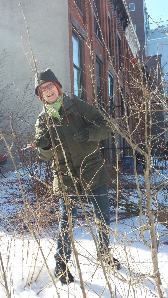 2015-winter-pruning-10-steuartia-pruning-catherine