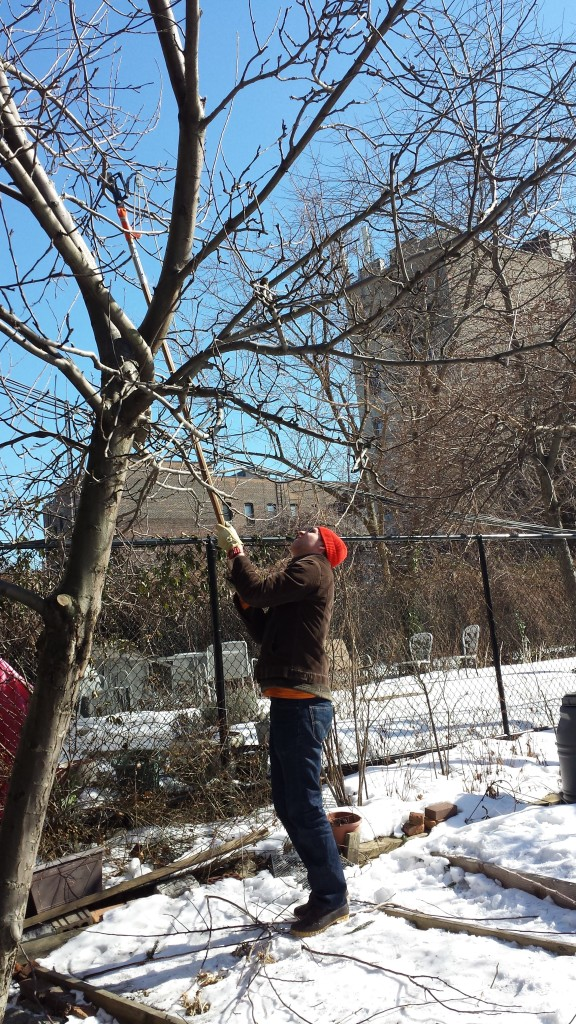2015-winter-pruning-11-pole-saw-jeremy1