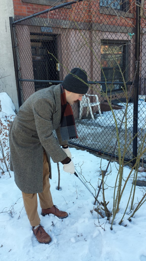 2015-winter-pruning-8-rose-pruning-william